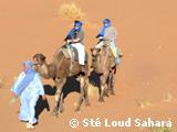 Beauté multiple du désert marocain
