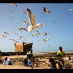 Circuits Découvertes au Sud du Maroc